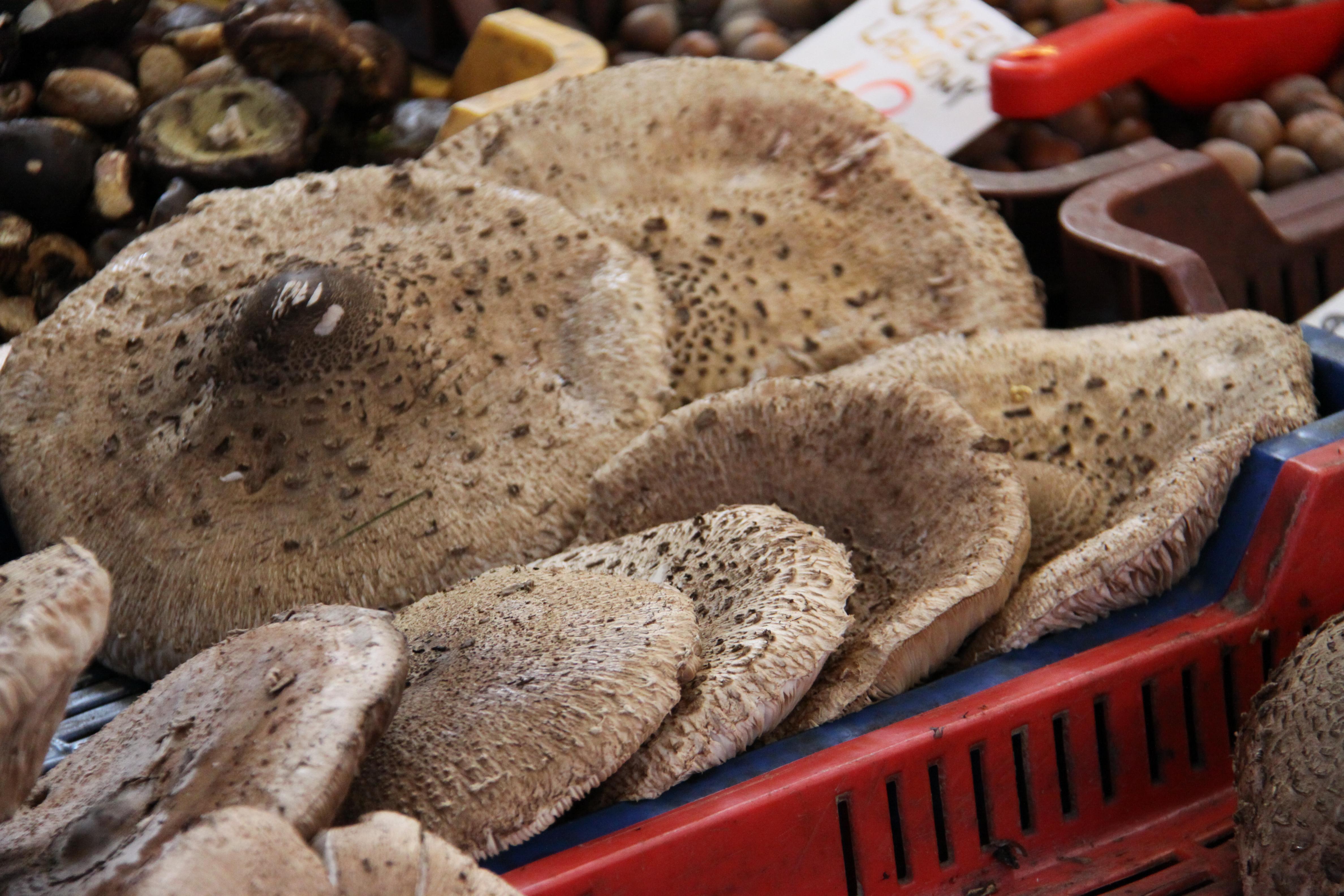Wroclaw market 4